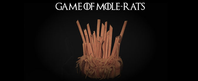 Game of Mole-rats